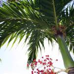 """Palm Tree 2"" by LifetoLensPhotography"