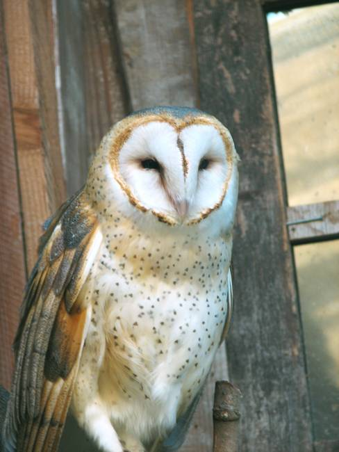 "Stunning ""Owl"" Artwork For Sale on Fine Art Prints"