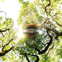 Eye in the Trees