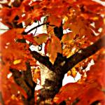 """""""Fall"""" by PerryWebster"""