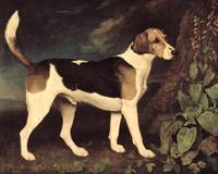 Ringwood, a Brocklesby Foxhound, 1792, by George S
