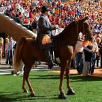 """TN WALKING HORSE"" by chrisreagan"