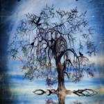 """The wishing tree"" by JohnEdwards"