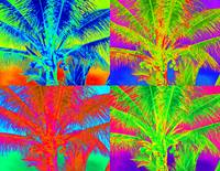 PALM TREE POP ART