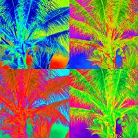 """PALM TREE POP ART"" by dolphin2ds"