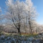 """Winter parkland"" by StephenIK"