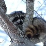 """""""Tree Hugger"""" by Laurel"""