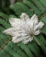 Leaf in Winter