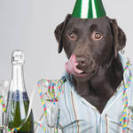 """""""Party Animal"""" by jmpaget"""
