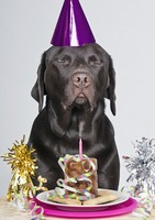 The Doggy Birthday Wish