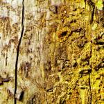 """Yellow Wood"" by bettynorthcutt"