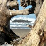 """Imagekind_Through The Driftwood"" by barbsummering"
