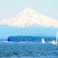 Mt Hood  from The Columbia River Art Prints & Posters by Barb Summering