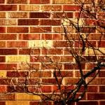 """tree on brick"" by rachel"