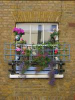 flowery window