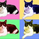 """Tomcat popart"" by ArtsandDogs"