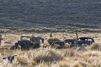 Old Cars and Sagebrush, Bodie