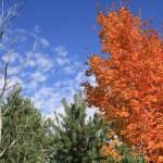 """""""Fall"""" by shepweb"""
