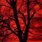 """Red Dawn"" by irishphotographer"