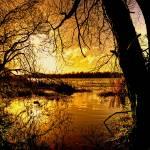 """Autumn Gold"" by irishphotographer"