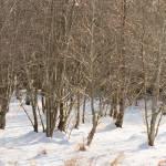 """Winter Sun"" by geoffallen"