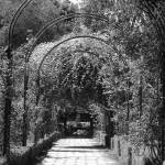 """""""Romantic Meeting Place Black/White by K. Yaude"""" by kyaudeart"""