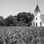 """Church & Corn"" by GregFowler"