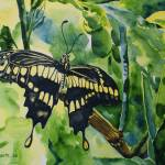 """Lime Tree Butterfly I"" by mtgoodliving"