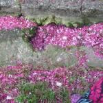 """""""Spring rain"""" by bentensmiling"""