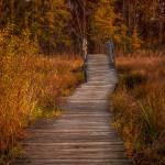 """Autumn Bridge"" by ZeipekisPhotography"