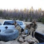 """Mountain Dogs"" by Aleta"