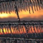 """""""Barbed Ice V"""" by Aleta"""