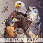 """birds of prey poster"" by rchristophervest"