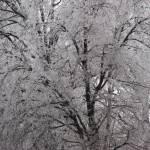 """Barbed Ice IX"" by Aleta"
