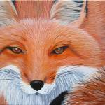 """Fox Close Up"" by wildlifeandabstractart"