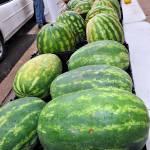 """""""Farmers Market Watermelons"""" by AaronRoeth"""