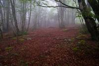 The forest and the fog