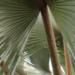"""""""Denver Botanic Gardens, Satra 1"""" by sethgoldstein72"""