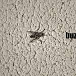 """""""Buzz Off"""" by doryyounes"""