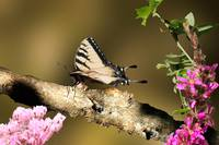Butterfly on brown branch