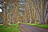Tunnel of Trees, Point Reyes