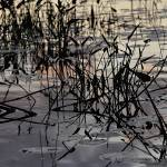 """Clouds Reflected Amongst the Reeds"" by fotographics"