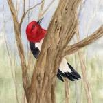 """Redheaded Woodpecker"" by catspaw"