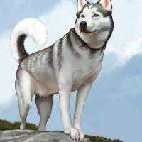 Cody in Charge - Siberian Husky Art Prints & Posters by Tim Beasley