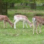 """""""3 deer"""" by TheNug"""