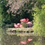 """Flamingos 1"" by TheNug"