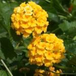 """Flower 1"" by TheNug"