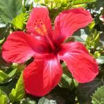 """Flower 3"" by TheNug"