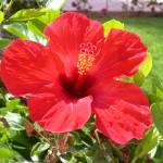 """Flower 4"" by TheNug"