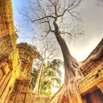 """Ta Phrom - Angkor, Cambodia"" by TourismPicks"